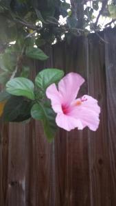 hibiscus_resized
