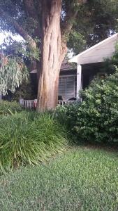 treegrass
